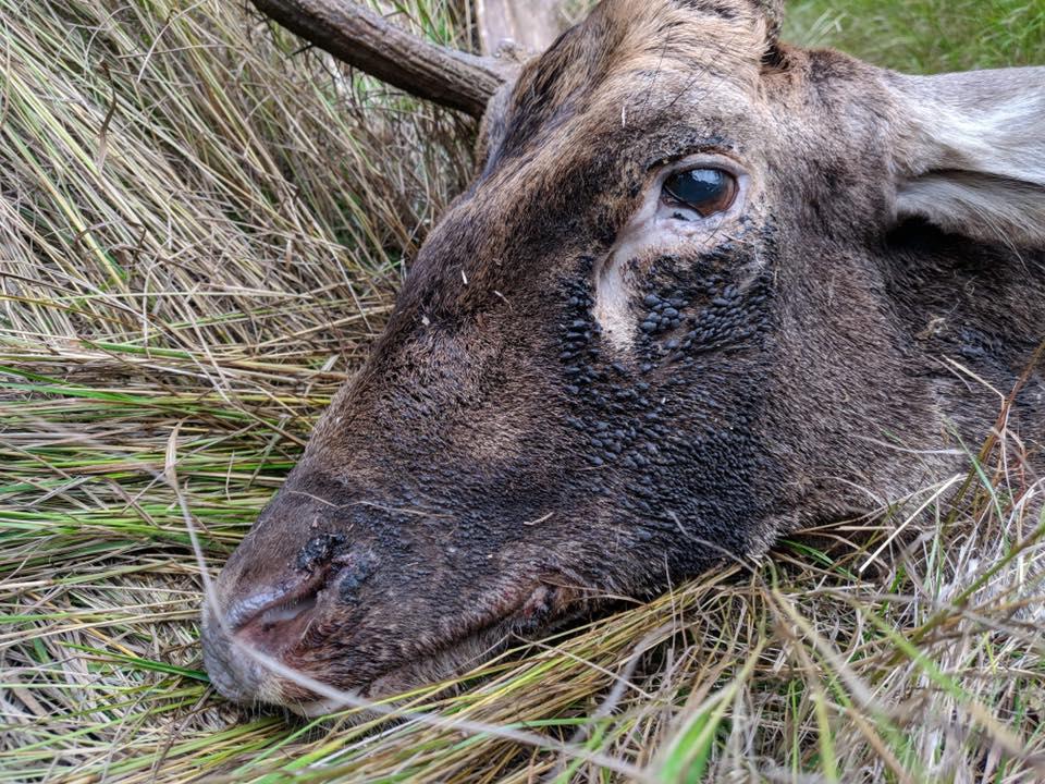 Jagt på Lykkesholm