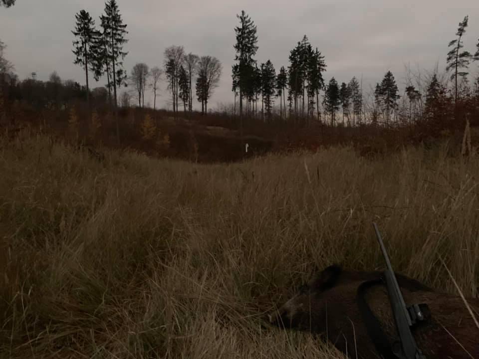Drivjagt i Polen