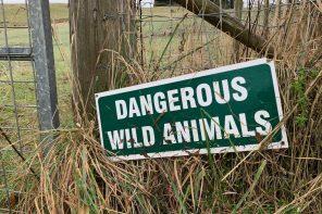 Hegnsjagt: Rigtig jagt eller ikke?!