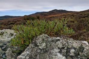 Hjortejagt i det skotske højland. Part 1