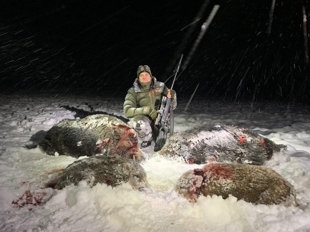 vildsvinejagt i Sverige