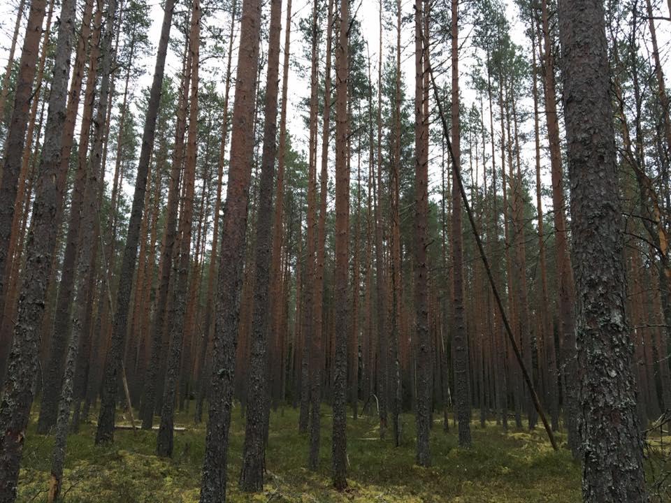 Elgjagt i Estland