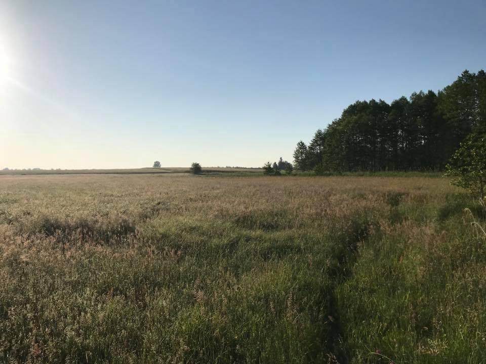 Bukkejagt i Polen