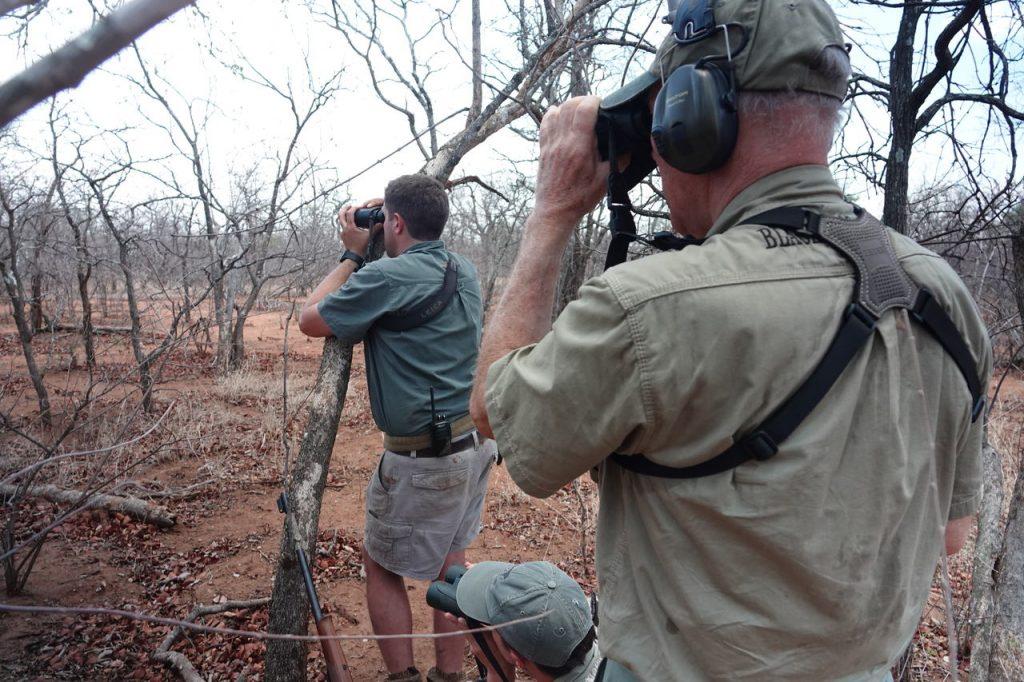 Bøffeljagt i Sydafrika
