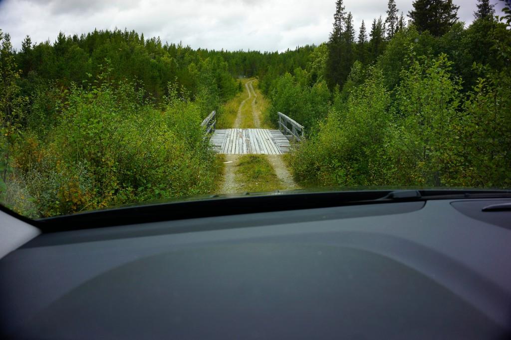 Bro i skoven