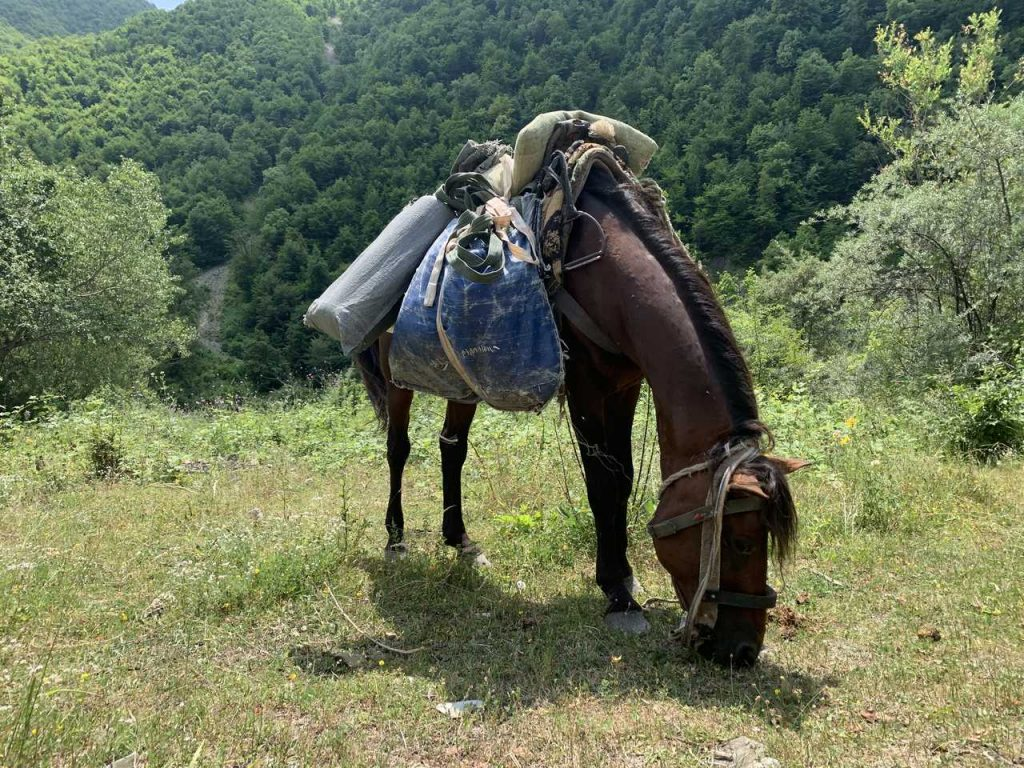 Dagestan tur jagt i Azerbaijan