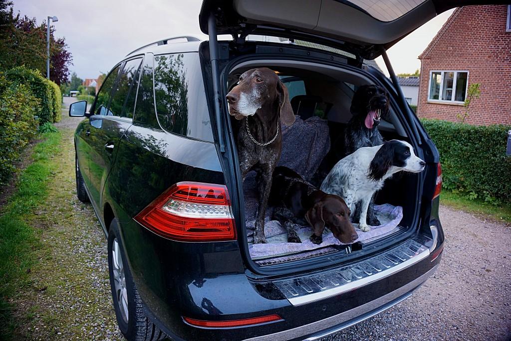 De fire hunde, som hurtigt blev gode venner!