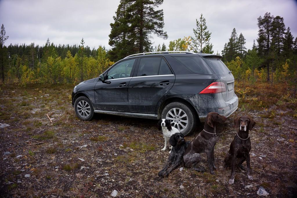 Mercedes og hunde