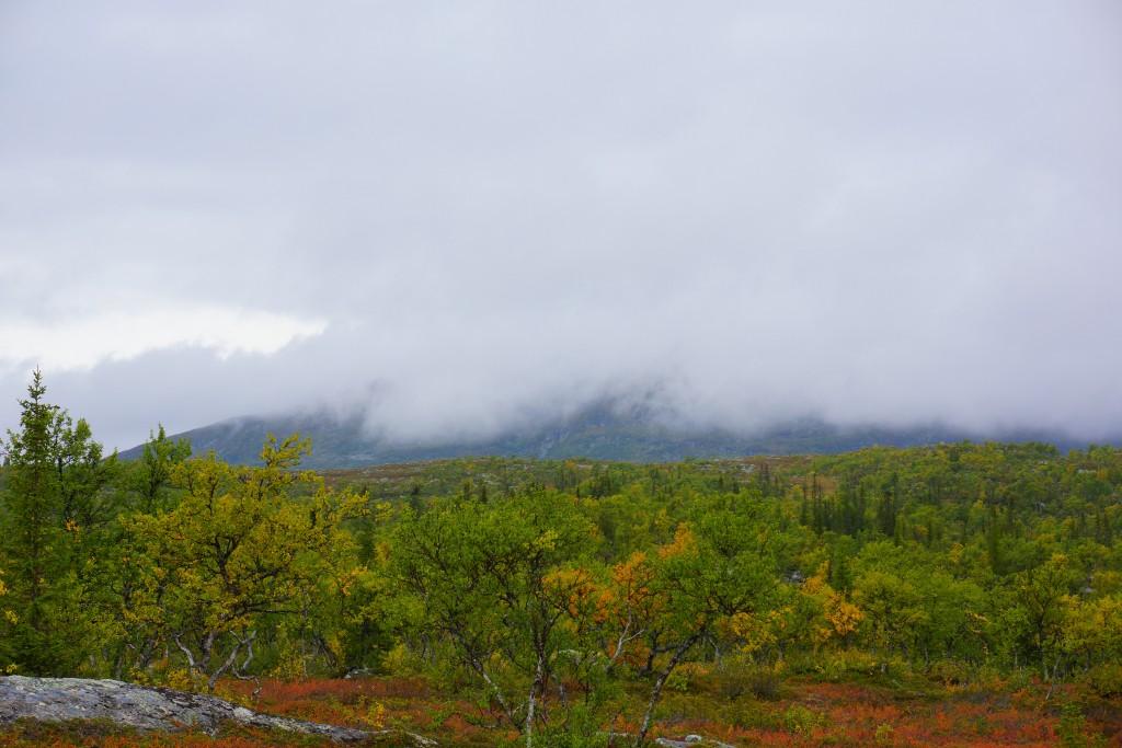bjerg i tåge